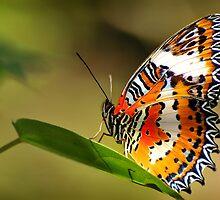 Butterfly 2 by mrLEV