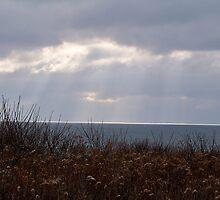 Sunshine On The Sea by Dandelion Dilluvio