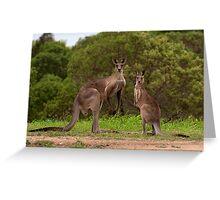 Eastern grey Kangaroos - Australia Greeting Card