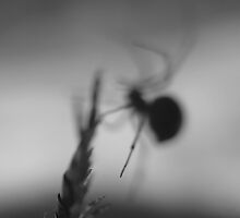 Spider vs. Centipede by CG1977