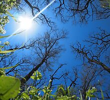 Spring sky - view from below  by vladromensky