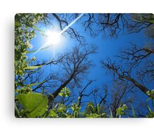 Spring sky - view from below  Canvas Print