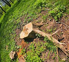 Stump of the cut tree on the edge of the forest by vladromensky