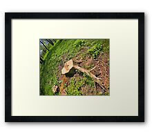 Stump of the cut tree on the edge of the forest Framed Print