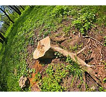 Stump of the cut tree on the edge of the forest Photographic Print