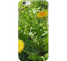 Sunny meadow with yellow dandelions iPhone Case/Skin