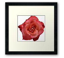Ombré Red Garden Rose III - Hipster/Pretty/Trendy Flowers Framed Print