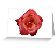 Ombré Red Garden Rose III Greeting Card