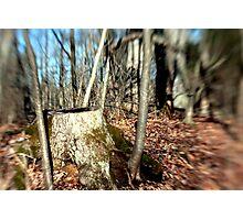 Tree Stump Photographic Print