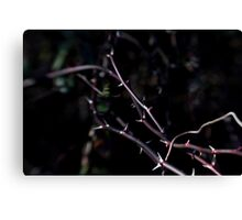 I wonder where the roses are.... Canvas Print