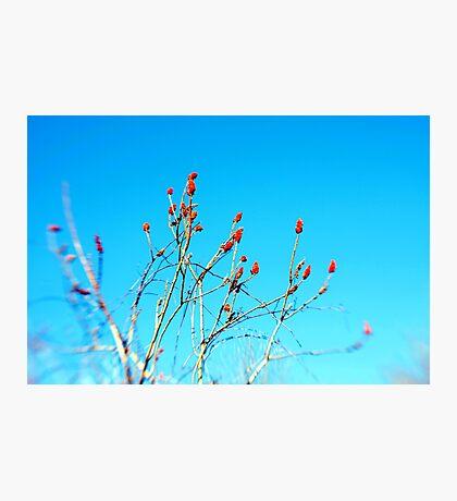 Trees = Beautiful. Photographic Print
