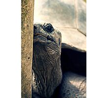 Giant Tortoise, Singapore Zoo Photographic Print