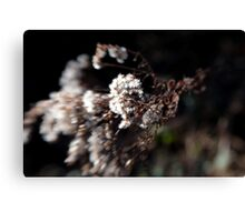White Flowery Thing Canvas Print