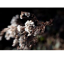 White Flowery Thing Photographic Print