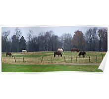 Open field with horses Poster