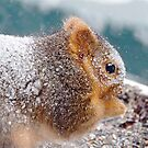 Snowy Squirrel by H A Waring Johnson