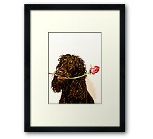give you a rose Framed Print