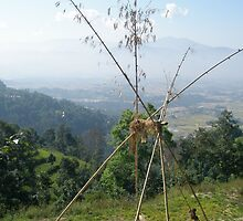The bamboo swing by chitrali