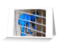 Caged Baby Greeting Card