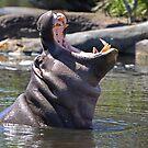 Hungry Hippo by Brett Keith