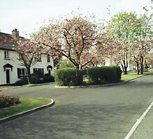 Cherry Trees at Merville Garden Village by Rosetta Jallow