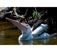 Pelican XX Photographic Print