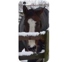 Cold horse in the snow iPhone Case/Skin