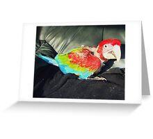 macaw 9 weeks Greeting Card