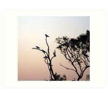 Cockatoo parrots, Australia Art Print