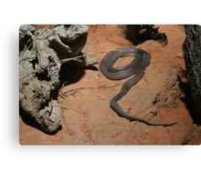 Black snake, Australia Canvas Print