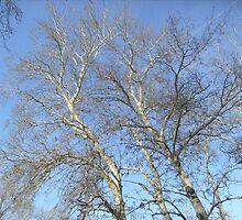 Lacy branches..... by Ana Belaj