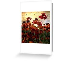 Orange coloured flowers in my garden Greeting Card