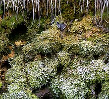 Frozen World - Moss by Walter Quirtmair