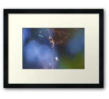 spider waiting in the forest Framed Print