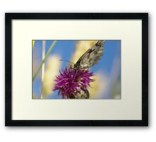 butterfly on a purple flower Framed Print