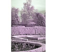 Alice's garden Photographic Print