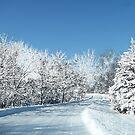 Winter Paradise by Linda Miller Gesualdo