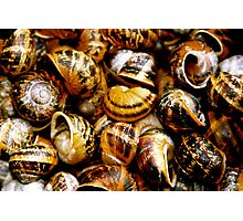 Dead snail shells Photographic Print