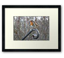 Picturesque Robin Framed Print