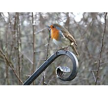 Picturesque Robin Photographic Print