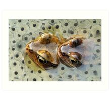 Frogs mating Art Print