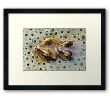 Frogs mating Framed Print