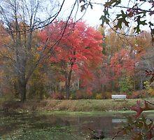 Late Autumn on Greenbelt Lake by nealbarnett
