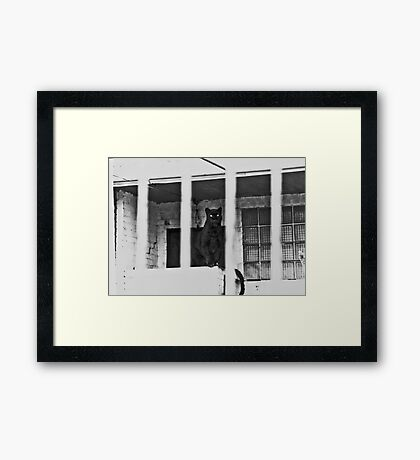 Unhappy Panther 1976 Framed Print