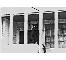 Unhappy Panther 1976 Photographic Print