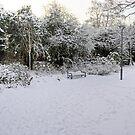 Rose Garden in the Snow by Tom Gomez