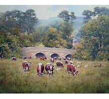 Longhorns at Pauperhaugh Bridge, Northumberlnad, England Photographic Print