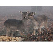 Misty Eyed Doe Photographic Print