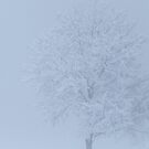 10am White Out Chamonix by forality