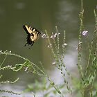 Swallowtail Butterfly  by April-in-Texas
